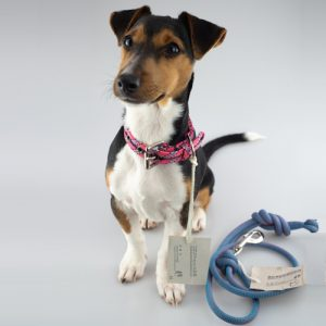 SCAVENGER Dog Collar